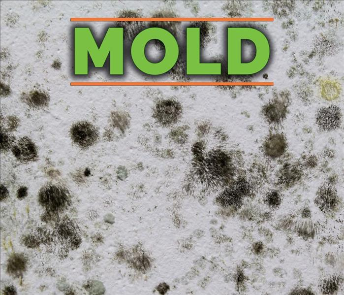Why Servpro The Most Common Types Of House Mold